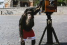 Chimpanzee's Photos Set To Sell at $100k at Auction!