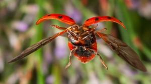 ladybug shot