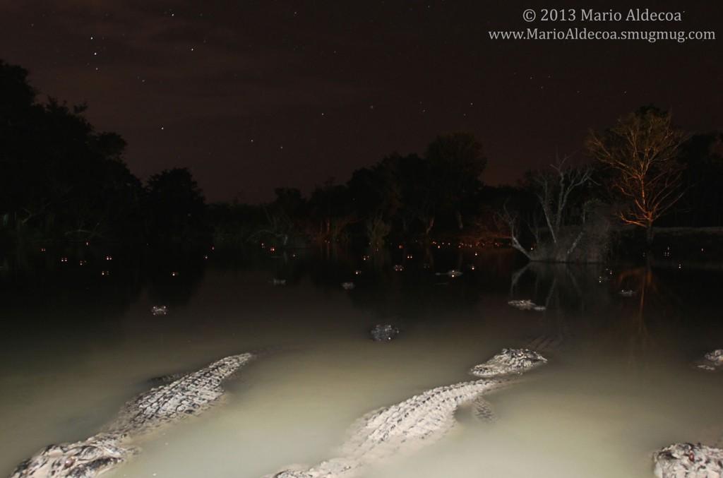 aligator camera