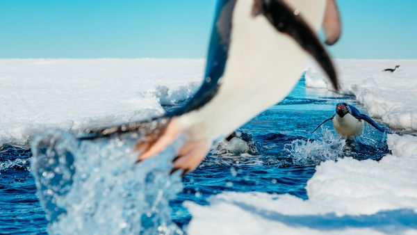 antarctic photos