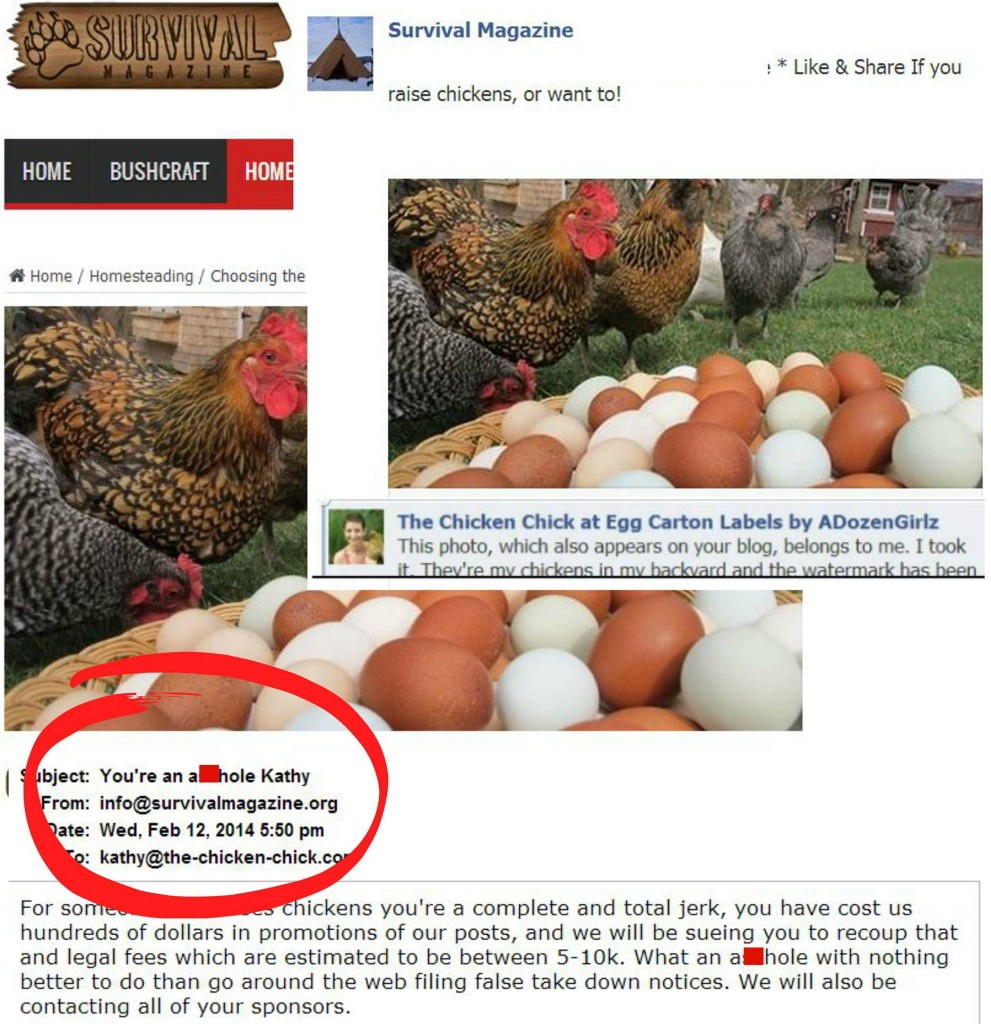 chicken chick email screenshot